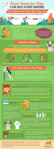 Infographic Design on Brain Games for Dogs